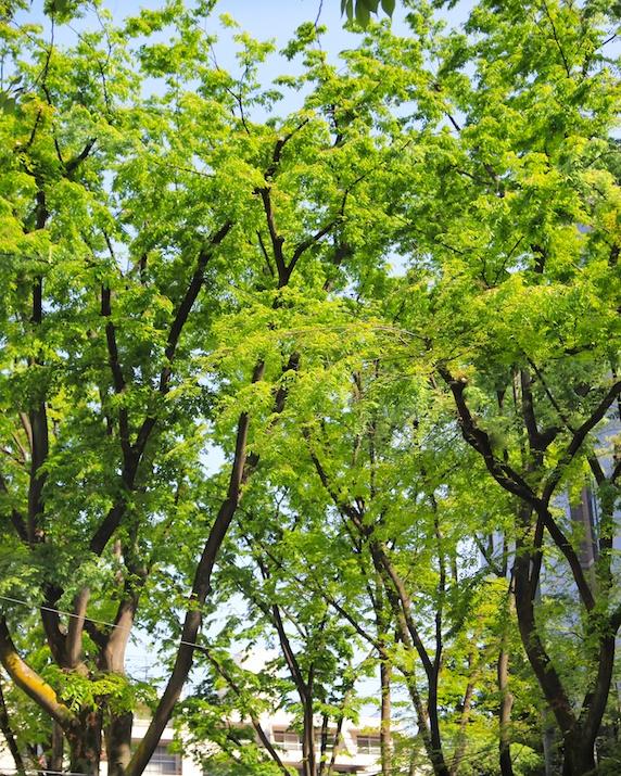美肌に効く「スッキリ前向きになるアロマレシピ」 新緑