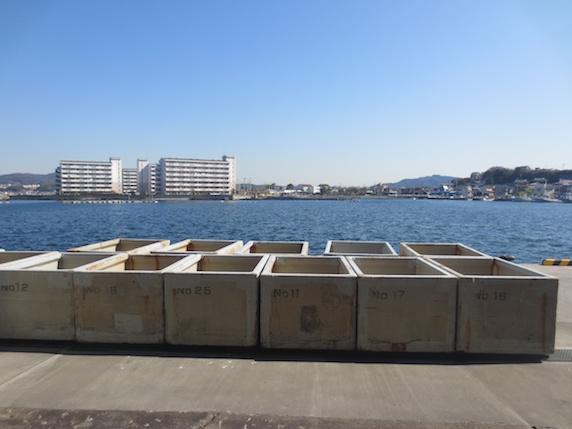 新鮮!港の朝市へ〜漁師直売!長井の朝市